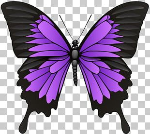 Butterfly Symbol Stock Photography PNG