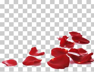 Petal Rose Flower Stock Photography PNG