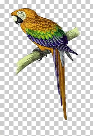 Parrot Bird Cross-stitch Macaw Pattern PNG