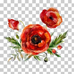 Watercolor Painting Flower Poppy PNG