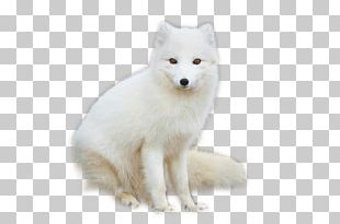 Arctic Fox Red Fox Arctic Hare PNG