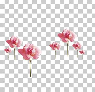 Rose Flower Painting Pink Paper PNG
