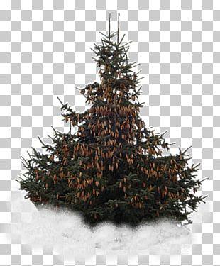 Spruce Christmas Tree Christmas Ornament Snowflake PNG