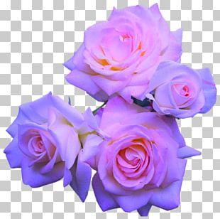 Rose Flower Purple Pink PNG