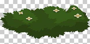 Shrub Tree Animation PNG