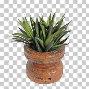 Succulent Plant Flowerpot Houseplant Agave Wood PNG