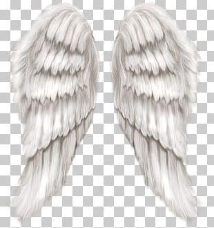 Cherub Wing Angel PNG
