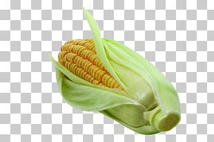Corn On The Cob Vegetable Maize Napa Cabbage PNG