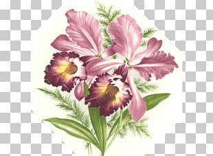Cut Flowers Floral Design Vase Flower Bouquet PNG