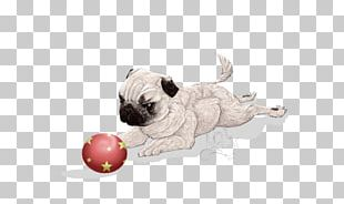 Pug Puppy Love Dog Breed Toy Dog PNG
