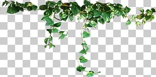 Houseplant PNG