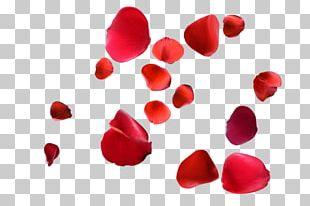 Petal Rose Red PNG