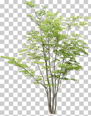 Tree Drawing Clipping Path PNG