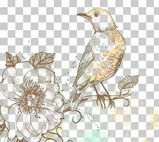 Classical Floral Pattern Background Shading Bird S PNG