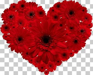 Transvaal Daisy Flower Red Heart Valentine's Day PNG