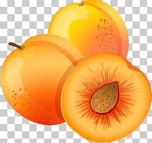 Apricot Fruit Peach PNG