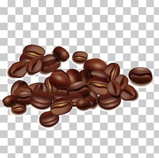 Coffee Bean Seed PNG
