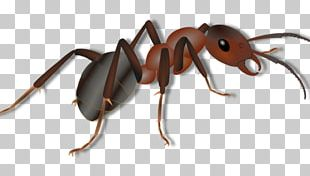 Insect Red Imported Fire Ant Pest Ant Colony Arthropod PNG