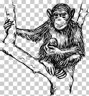 Chimpanzee Gorilla Ape Drawing PNG