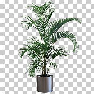 Houseplant Flowerpot Gardening Tree PNG