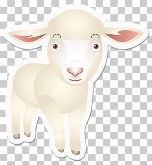 Sheep Goat Cattle Snout Animal PNG