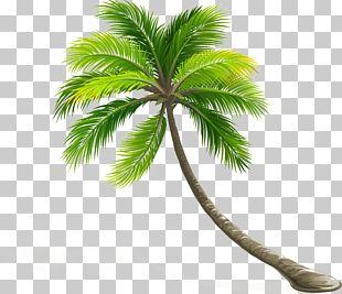 Coconut Arecaceae Leaf Tree PNG