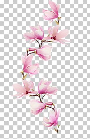 Magnolia Paper Flower Watercolor Painting Floral Design PNG