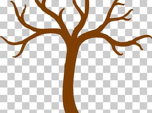Trunk Branch Tree Open PNG