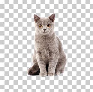 British Shorthair Kitten Dog–cat Relationship Cat Food PNG