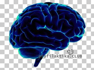 Human Brain Neuroscience Cognitive Science PNG