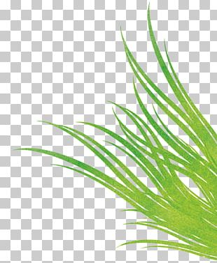 Sweet Grass Green Leaf Plant Stem PNG