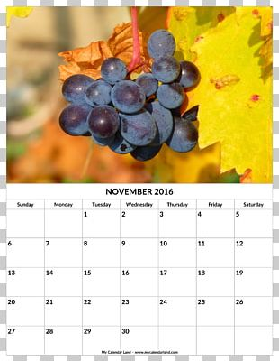 Common Grape Vine Wine Grape Seed Oil Fruit PNG