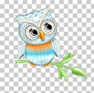 Little Owl Bird Barn Owl PNG