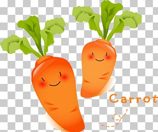 Carrot Vegetable Radish Food Fruit PNG