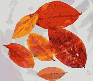 Autumn Leaf Color Tree PNG