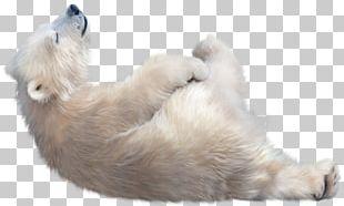 The Polar Bear Arctic Dog PNG