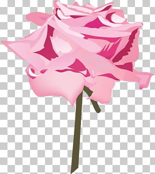 Cut Flowers Floral Design Rose Family Plant Stem PNG