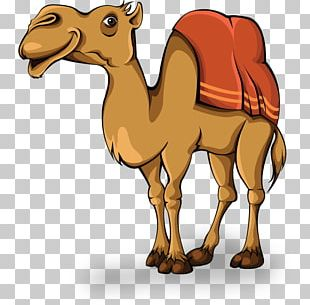 Camel Animation PNG