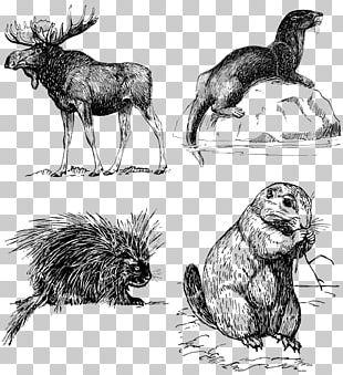 Moose Red Deer Elk Drawing PNG