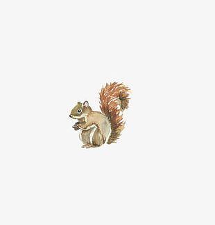 Watercolor Squirrel PNG