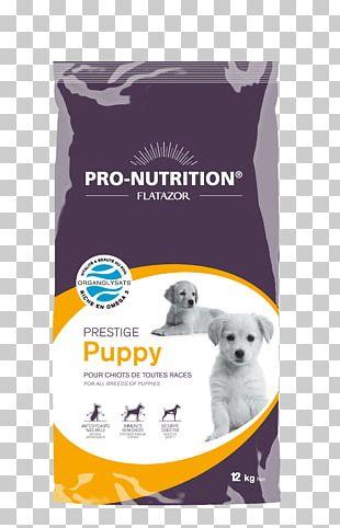 Puppy Poodle Dog Food Cat Pet PNG