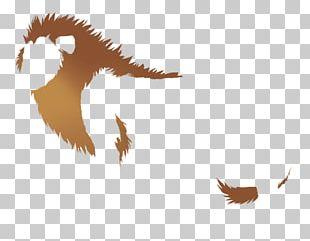 Bird Of Prey Beak Eagle Feather PNG