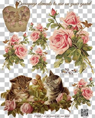 Cabbage Rose Garden Roses Paper Decoupage Pink PNG