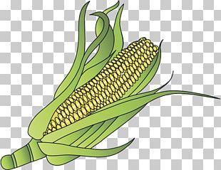 Corn On The Cob Maize Sweet Corn Organic Food PNG