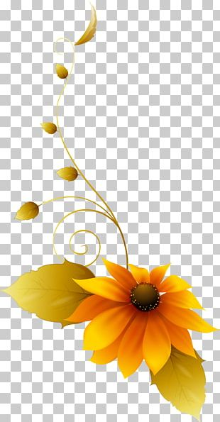 Common Sunflower Floral Design Still Life Photography Cut Flowers PNG