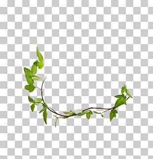 Twig Plant Stem Leaf Herb Line PNG