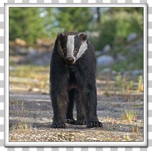 American Black Bear Sloth Bear Terrestrial Animal PNG