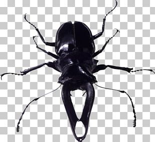 Bugs PNG