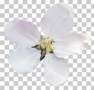 Flower Tulip Garden Yandex Snowdrop PNG