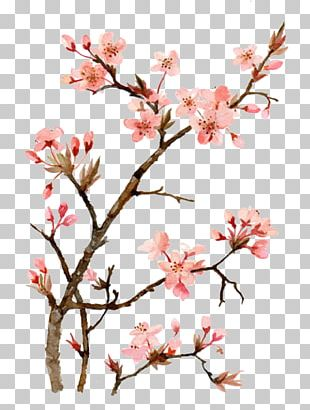 Cherry Blossom Watercolor Painting Drawing PNG